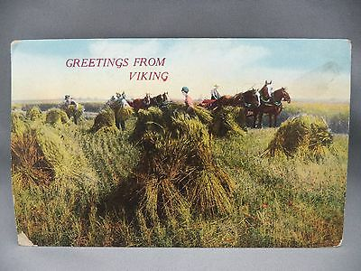 Vintage Color Postcard Greetings From Viking Horses Haying 1912 NS Cancel