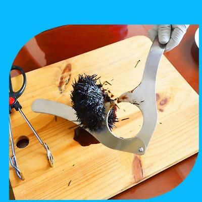 Stainless Steel 1 PC Sea Urchin Cutter Opener Opening Shell Tool W