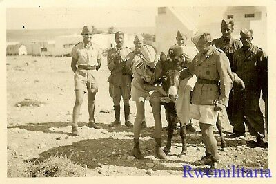 FUN! Luftwaffe Afrika Korps & Italian Arab Native Troops w/ Donkey in Desert!!!