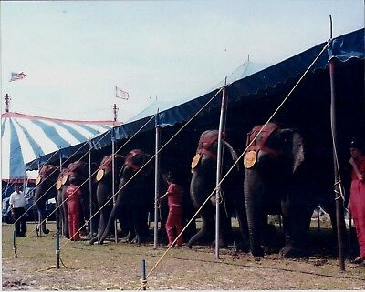 1985 - Clyde Beatty - Cole Bros Circus Elephant Tent
