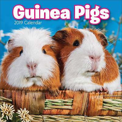 Guinea Pigs Mini Calendar 2019 Animals Month To View