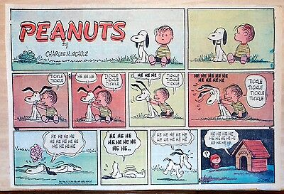 Peanuts by Charles Schulz - large half-page color Sunday comic - Sept. 8, 1957