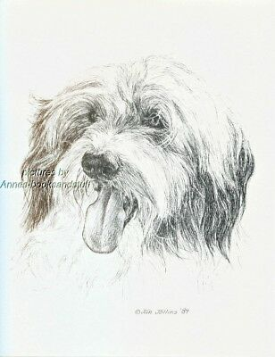 #336 BEARDED COLLIE  *  dog art print * Pen and ink drawing * Jan Jellins