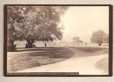 Kenilworth Ostrich Farm Looking North From Park-California Cabinet Card