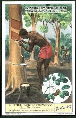 Rubber Tree  Plantation Africa Congo  1930s Trade Ad Card