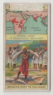 Natives Taking Ivory Tusks To The African Coast  100+  Y/O Ad Trade Card