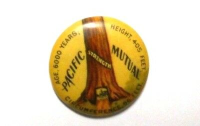 Antique PACIFIC MUTUAL Life Insurance Pinback Button ,6000 yr. old tree, 3/4""