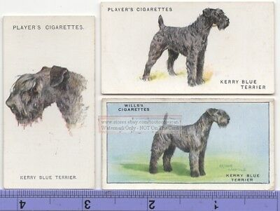 Kerry Blue Terrier Dog 3 Different Vintage Ad Trade Cards #3 Canine Pet