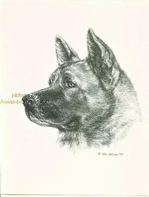 #165 AKITA portrait dog art print * Pen and ink drawing by Jan Jellins
