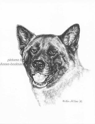 #308 AKITA portrait dog art print * Pen and ink drawing by Jan Jellins