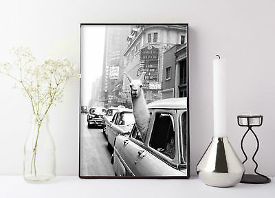 Llama in a taxi on Times Square • 1957 llama print New York City Eclectic Home
