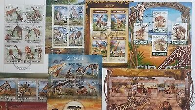 25 Different Giraffes on Stamps Collection