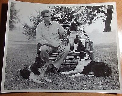 1950's Actual 8 X 10 Photo Of Carl Bradford W/3 Of His Border Collies Wooster Oh