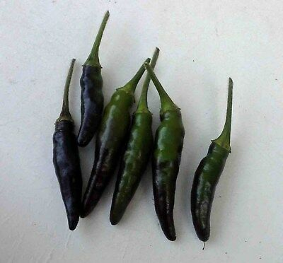 Black cobra chilli pepper seeds x 100 fresh organic non gmo seed Rare