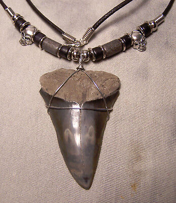 """Big Man 2 5/16"""" Mako Shark Tooth Teeth Necklace Fossil Jaw Megalodon 22"""" Cord"""