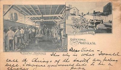 Greetings From Norfolk Virginia Oyster Shucking Cow Carriage Postcard 1911