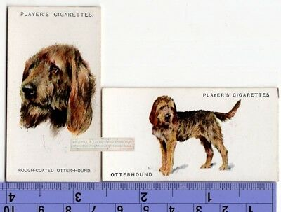 Otterhound Dogs 2 Different Vintage Ad Trade Cards 2nd