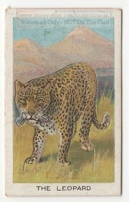 Leopard Cat With Pop-Up Image 1920s Ad Trade Card
