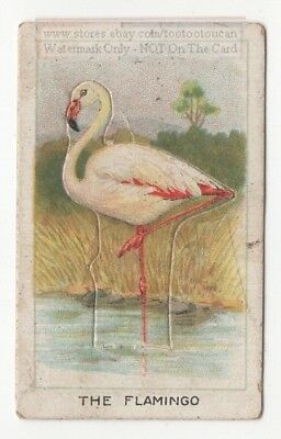Flamingo Bird  With Pop-Up Image 1920s Ad Trade Card
