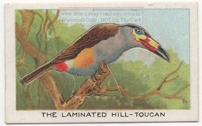 Laminated Hill Toucan Bird  With Pop-Up Image 1920s Ad Trade Card