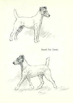 * Smooth Fox Terrier - Vintage Dog Print - 1938 KF Barker