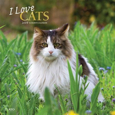 2019 I Love Cats Wall Calendar, Assorted Cats by BrownTrout