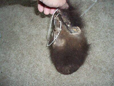 bison scrotum real buffalo Ball bag oddity nutsack gag gift  WINTER BAG art  J1