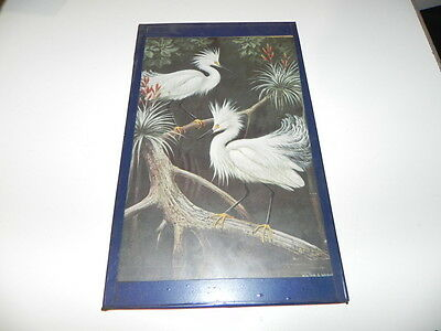 Vintage Picture Walter A Weber  Snowy Egrets Display their Courtship Plumage