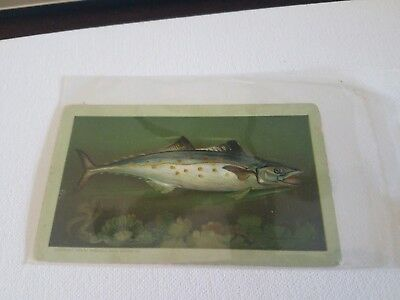 1880s Arbuckle Coffee Adv Trade Cards  Free ship Victorian  Cooking Mackeral #44