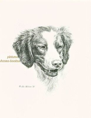 #89 BRITTANY SPANIEL  portrait dog art print * Pen and ink drawing * Jan Jellins