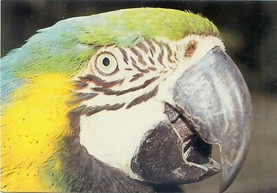 Cotswold Wild Life Park - Blue & Yellow Macaw - Postcard View