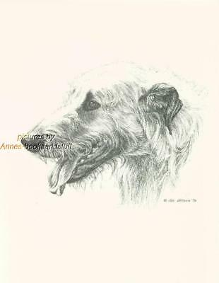 #141 IRISH WOLFHOUND portrait dog art print * Pen and ink drawing by Jan Jellins