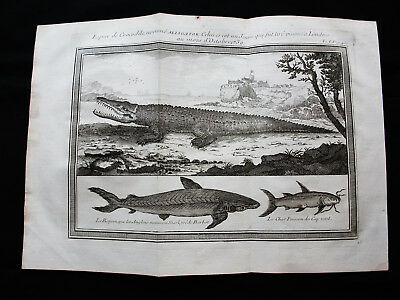 1754 BELLIN - orig. Print of AFRICA, CAPE VERDE, CROCODILE, ALLIGATOR, SHARK...