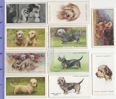 Dandie Dinmont Terrier Dog 10 Different Vintage Ad Trade Cards #3 Canine Pet
