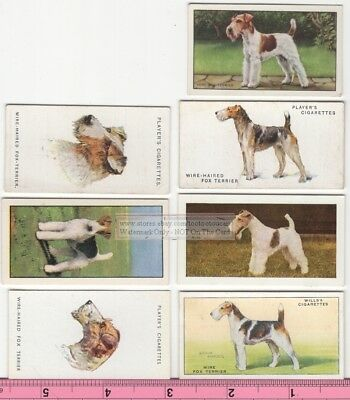 Wire Haired Fox Terrier Dog 7  Different Vintage Ad Trade Cards #3 Canine Pet