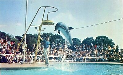 London Or Whipsnade Park Zoo - Bottle Nosed Dolphin - Postcard View