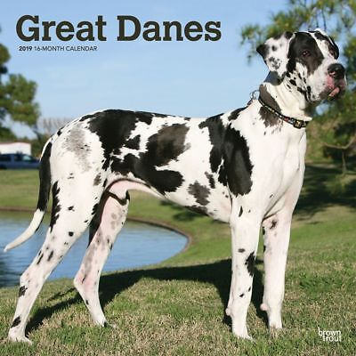 2019 Great Danes International Wall Calendar, Great Dane by BrownTrout