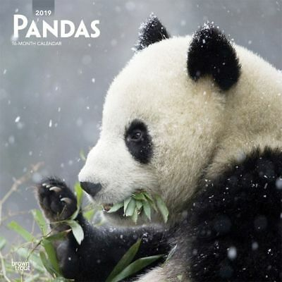 2019 Pandas Wall Calendar, Wildlife by BrownTrout
