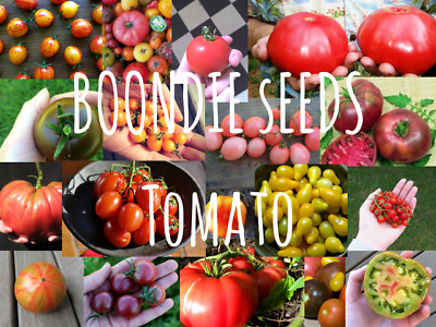 HEIRLOOM TOMATO SEEDS 70+ varieties rare unusual all colours vegetable garden