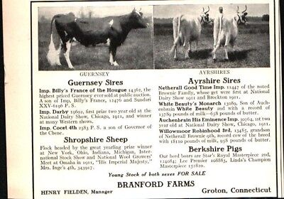 1912 Branford Farms CT Guernsey + Ayrshire Sires Cattle Vintage Print Ad 719