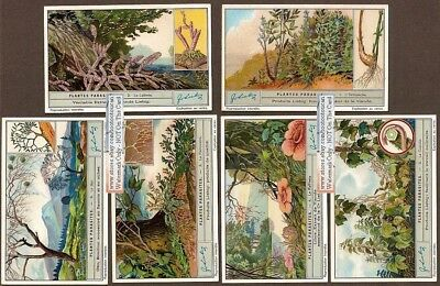Parasitic Plants Nature 6 NICE 1920s Trade Ad Cards
