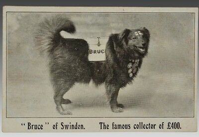 Antique Postcard ~ Bruce Of Swindon, Famous Collecting For Charity Dog