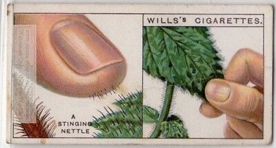 How Nettle Plants Sting Medical  90+  Y/O Ad Trade Card