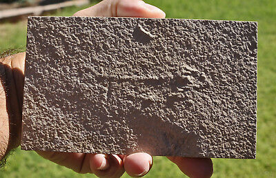 "Unprepped Fossil Fish, Knightia eocaena, 18"" layer,  GRF,  Wyoming, U.S.A. #2"