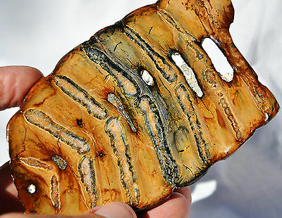 """7552x WOOLLY MAMMOTH Tooth Slice Texture One Side Genuine FOSSIL XLRG 126mm 5.0"""""""
