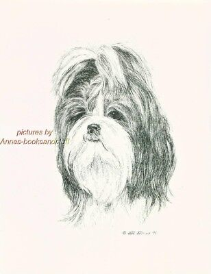 #56 SHIH TZU portrait dog art print * Pen and ink drawing * Jan Jellins