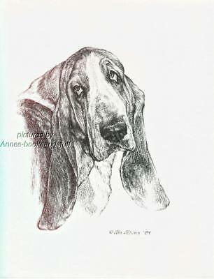 #335 BASSET HOUND portrait dog art print * Pen and ink drawing by Jan Jellins
