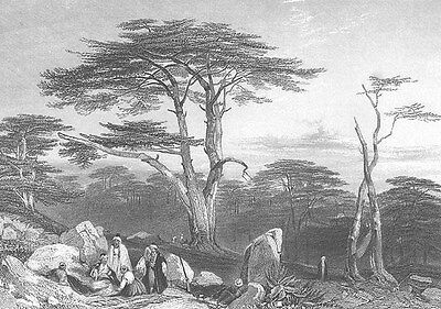 Bible CEDARS OF GOD LEBANON FOREST Mountains, 1835 Landscape Art Print Engraving