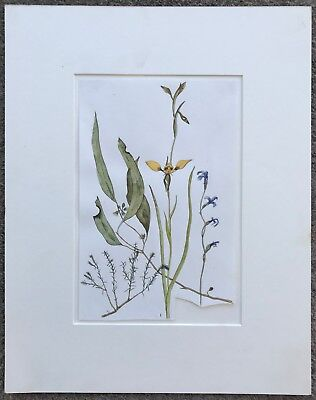 Adrianne Strampp - Illustrated Artwork - Chai The Kangaroo & A Year Of Orchids