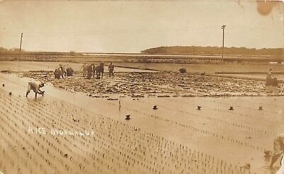 LP24 Hawaii Hawaiian Islands Rice Field RPPC Vintage Postcard
